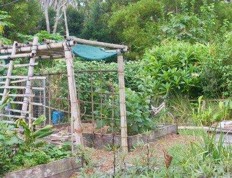 8 съвета за моравата от градинар гуру